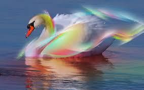 magic-swan.jpg