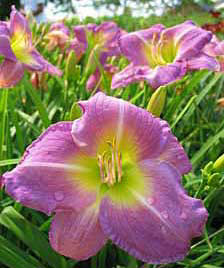 Edflowers2.jpg