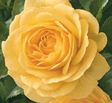Edflowers4.jpg