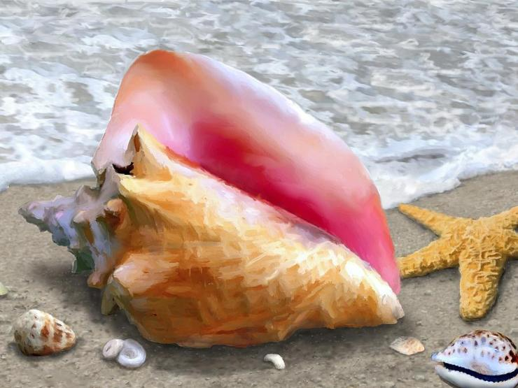 1-conch-shell-beach-stephen-jorgensen