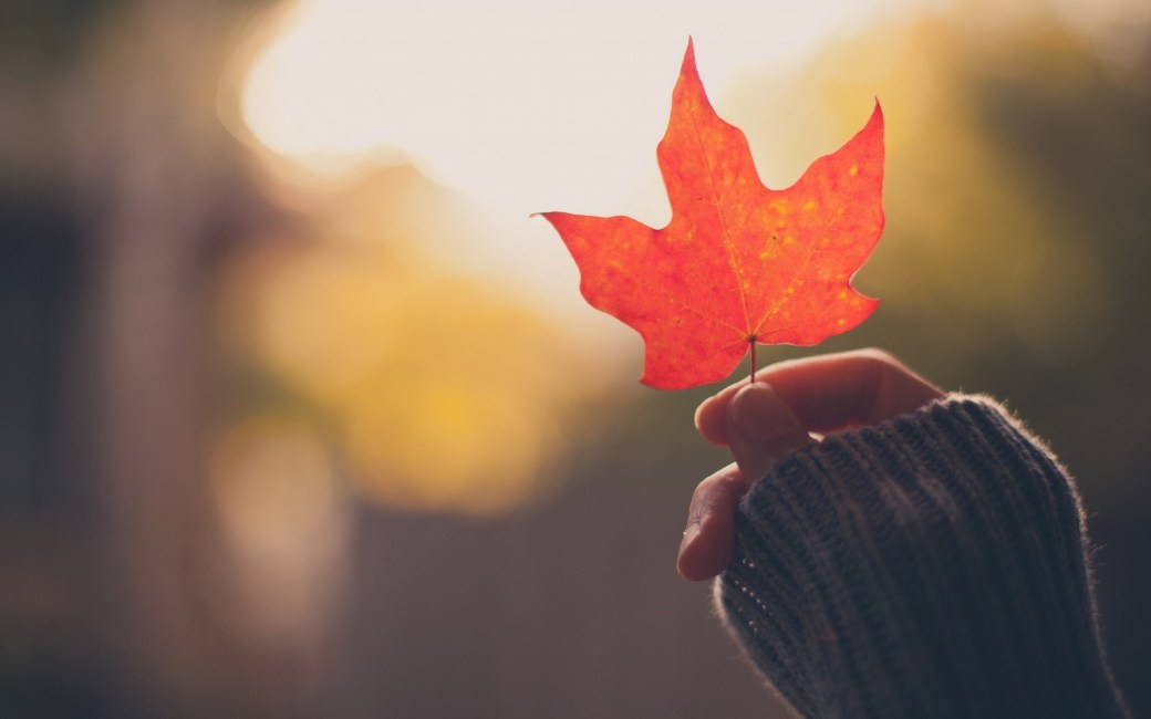 girl-hand-holding-an-autumn-red-maple-leaf