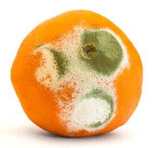 annoying-orange-mold